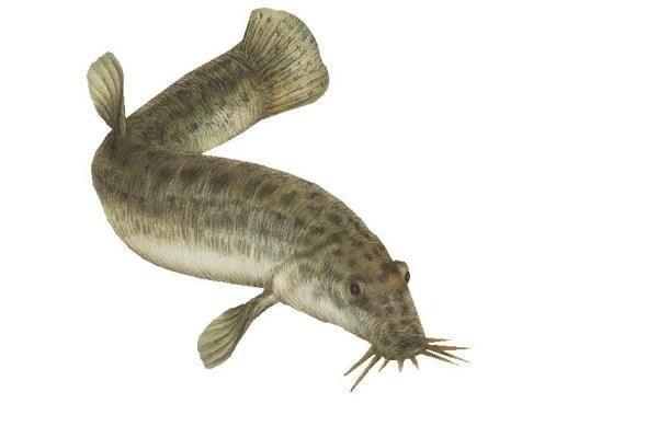 Jūrų muziejuje bus pristatyta moneta su žuvimi