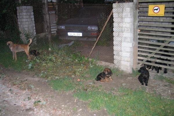 Dituvos gyventojus terorizuoja šunys