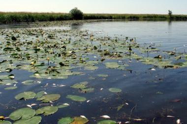 Pradėtas ikiteisminis tyrimas dėl Šyšos upės užteršimo