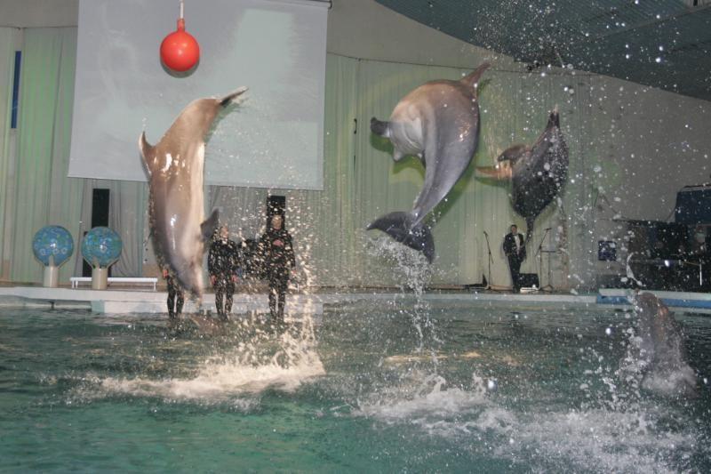 Delfinai Klaipėdos delfinariume galėtų pasirodyti anksčiausiai po metų