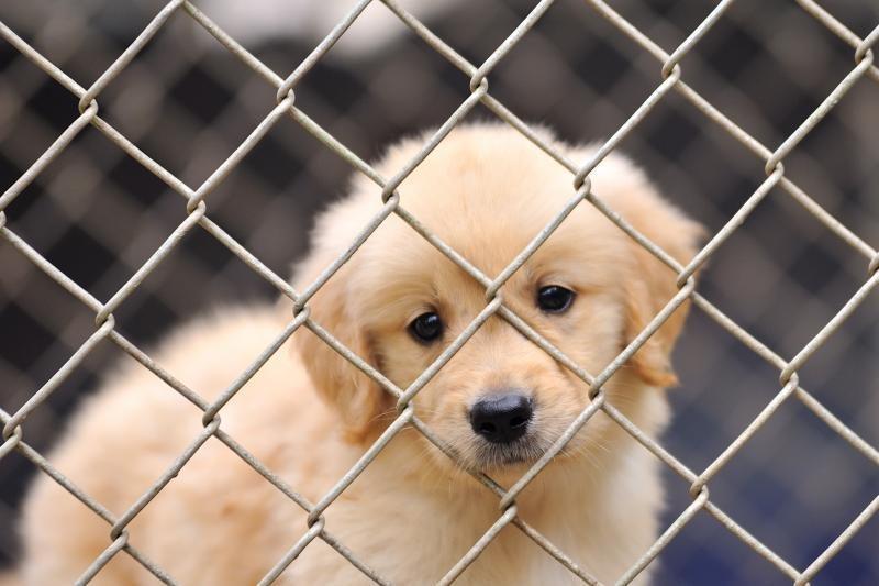 Nuosprendis: radai beglobį šunį - pats jį ir priglausk