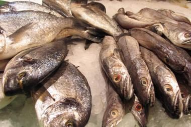 Panevėžio tvenkinyje – negyvos žuvys