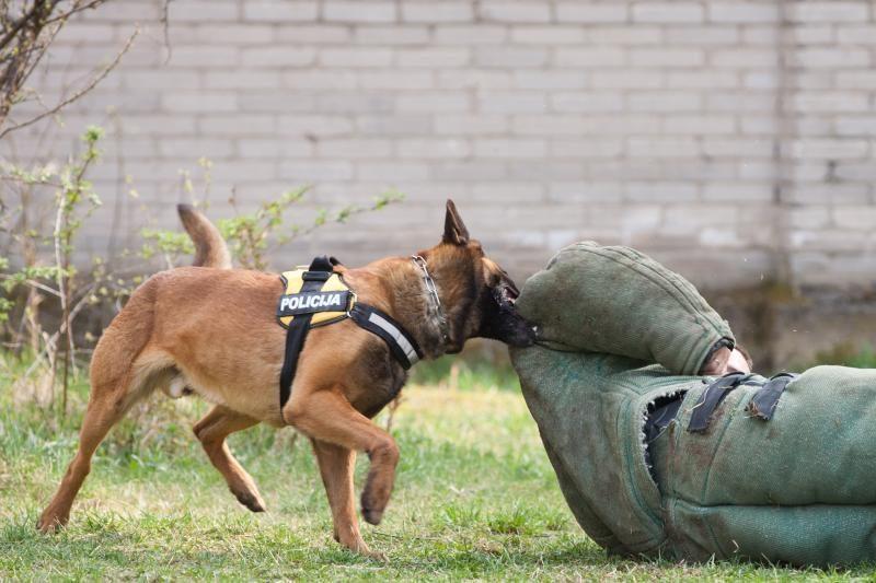 Stikliuko mėgėją padėjo nutverti   šuo