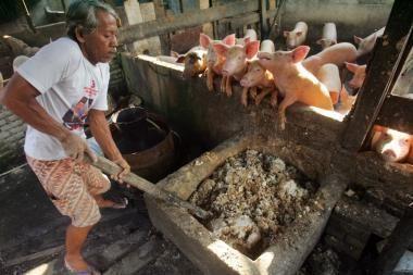 Kiaulių gripas Meksikoje pareikalavo 16-os aukos