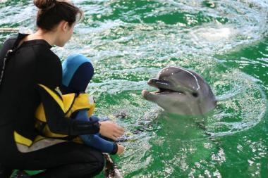Už LNK žiūrovų pinigus gerinamos delfinų gyvenimo sąlygos