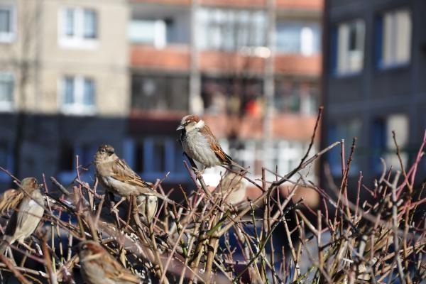 Paukščiai šiemet į Lietuvą grįžta lyg pagal laikrodį