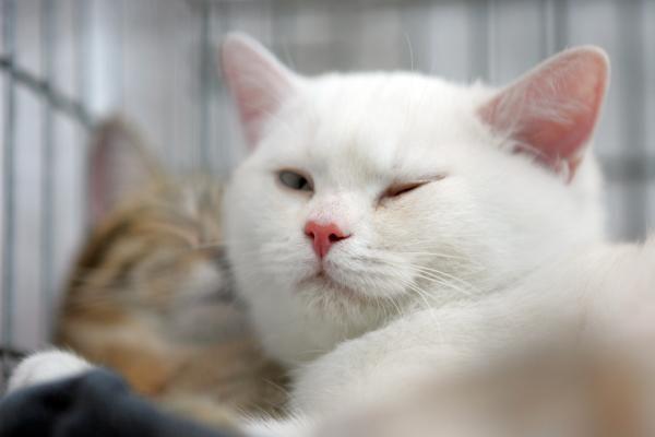 Kur išvykstant ilgam laikui palikti kates?