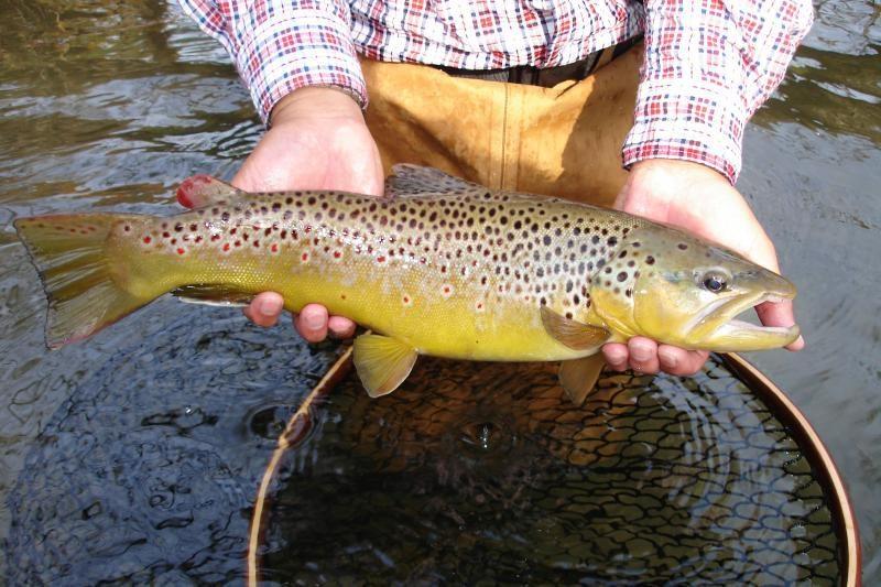 Siūlo pensininkams ir paaugliams leisti žvejoti nemokamai
