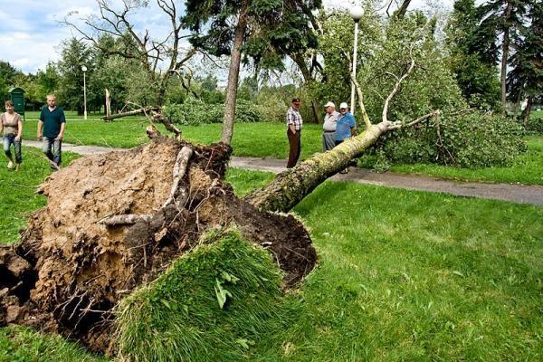 Panevėžio rajone siautusi audra vartė medžius