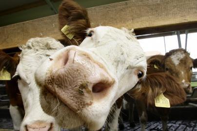Per šalčius svarbu nepamiršti pasirūpinti gyvūnais