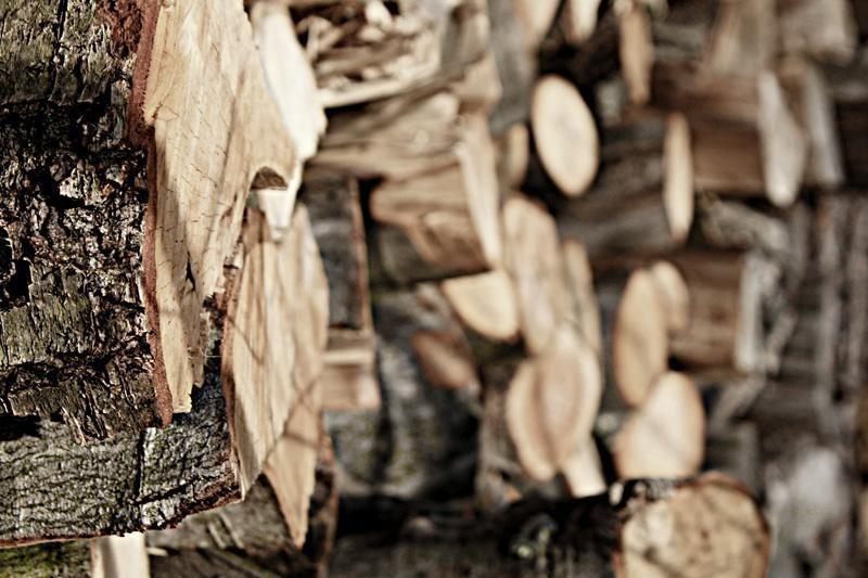 Salantiškės miške vagys iškirto medžius