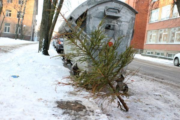 Gyventojai raginami leisti kalėdinėms eglutėms virsti biokuru