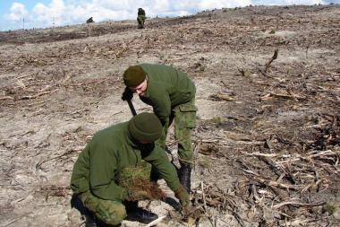Kariai padeda atsodinti išdegusį mišką Smiltynėje