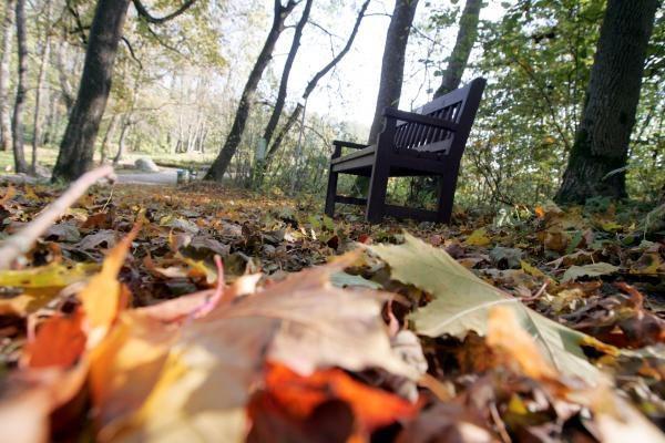 Vilniaus pradinukai bus mokomi saugoti gamtą