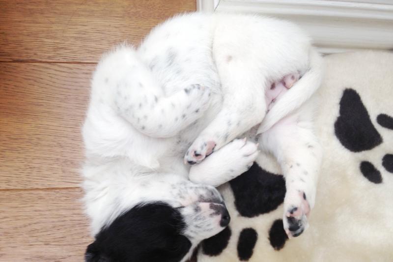 Išmestą šuniuką priglobusi A.Zacharevičienė ieško jam namų