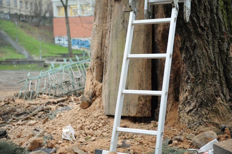 Seniausio Vilniaus ąžuolo viduje rasta net skudurų ir celofano