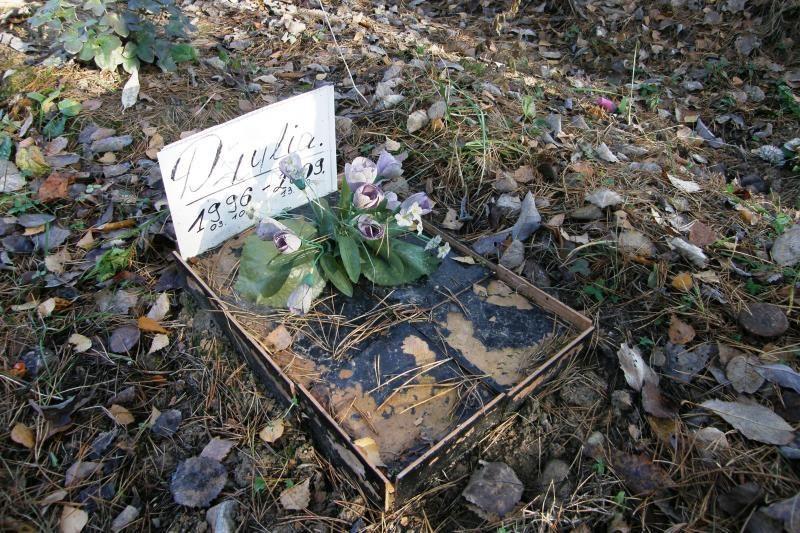 Valdžia kvies perlaidoti gyvūnus į legalias kapines