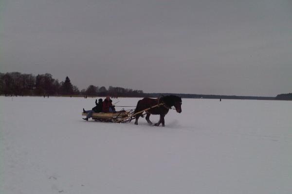 Žirgų lenktynės Dusetose: eilės tęsėsi iki 10 kilometrų (dar papildyta)