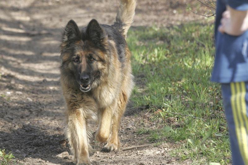 Žiauriai šunį užmušusiems Klaipėdos rajono gyventojams - baudos