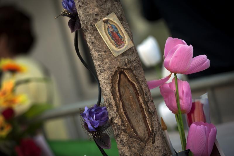 Amerikiečiai būriais traukia apžiūrėti medyje apsireiškusios Marijos