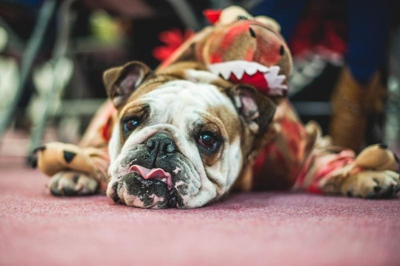 Helovino kostiumų konkurse dominavo šunys-velniai
