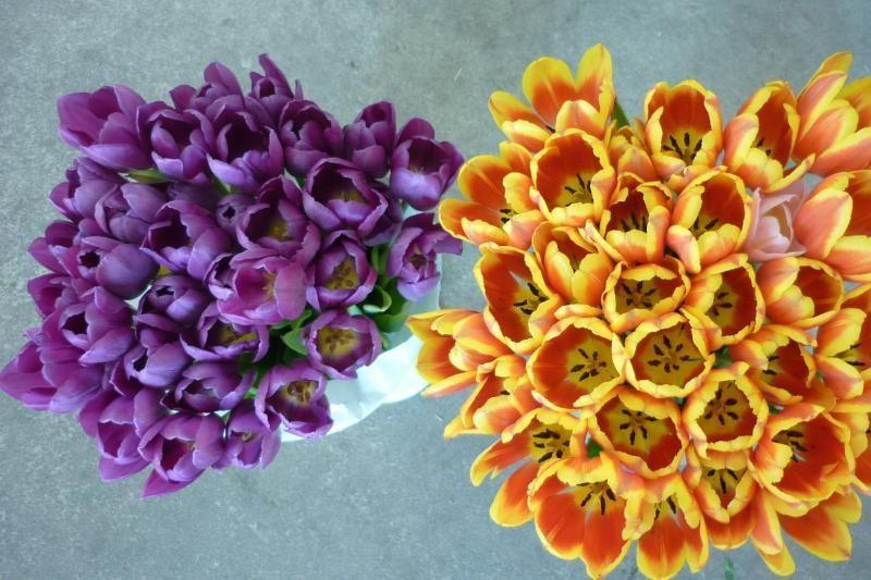 Tulpių parodoje - pusantro šimto gėlių rūšių