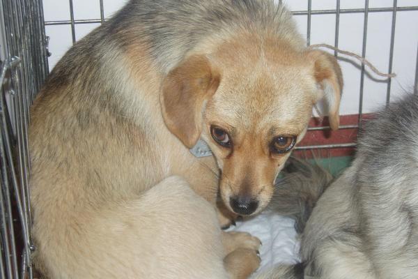 Šunų koncentracijos stovykla Trakuose tebeveikia