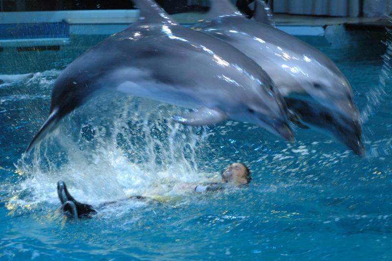 JAV pakrantės paplūdimyje atsidūrė itin daug delfinų