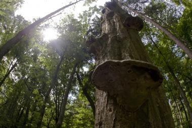 Šylančiame pasaulyje klesti medžiai