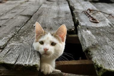 Panevėžio rajone mergaitės akivaizdoje tėvas užmušė katiną