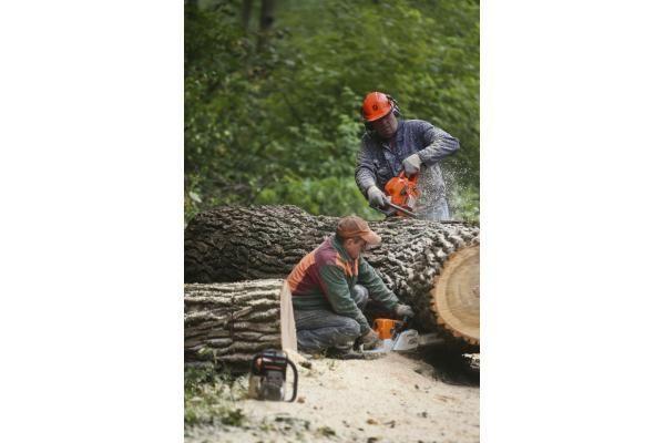 Pjaunami medžiai sutrukdė eismą sostinėje