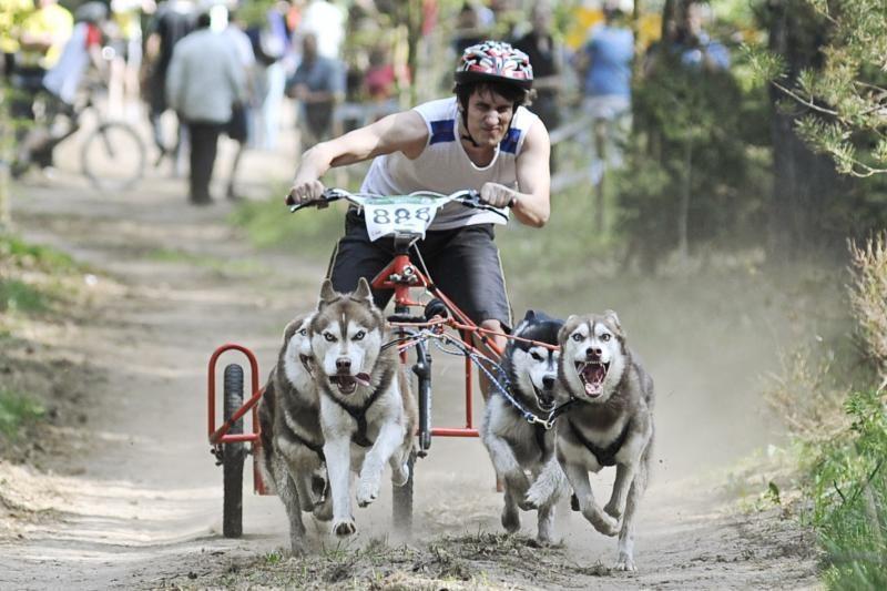 Jadagonių girios takais šuoliavo šunų kinkiniai
