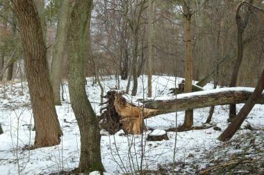 Klaipėdos aplinkosaugininkai tikrins miškų savininkus