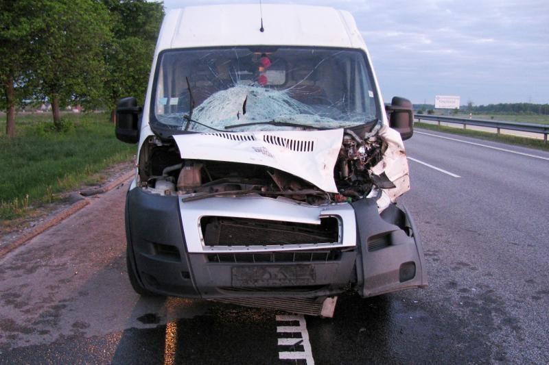 Policija įspėja saugotis žvėrių autostradoje ties Rumšiškėmis