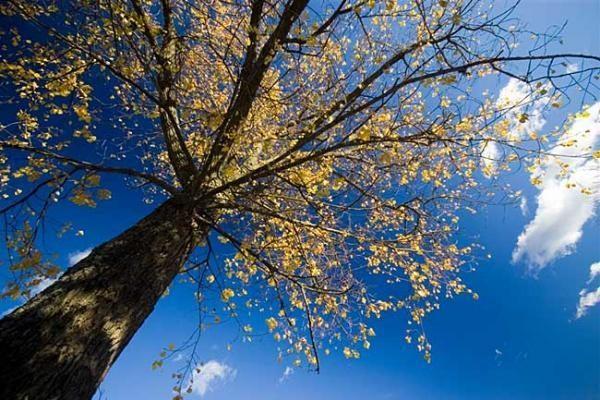 Lietuvoje savaitgalį – sausi ir rudeniškai šilti orai