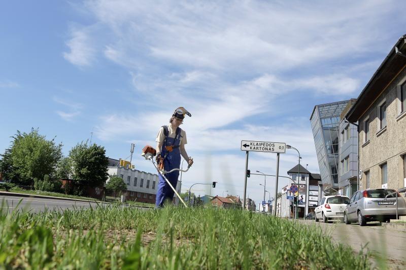 Želdinių prižiūrėtojai nespėja šienauti žolės