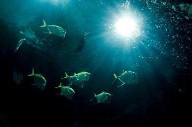 Mokslininkai ieško Atlanto vandenyno spalvos