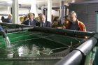 Pakaunėje modernizuojamas žuvininkystės sektorius