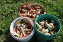 Grybautojams žada prastą sezoną