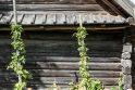 Žolinės Rumšiškėse – tarp miesto ir kaimo