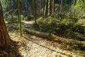 Parko atstovas į priekaištus: sunkiai praeinamos gamtos buveinės – būtinos