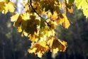 Vaizdas: medžiai dar pasipuošę spalvotu rudeniniu rūbu.