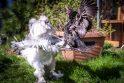 Svečiuose pas naminių paukščių karalienę