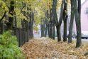 Klaipėdos gatvėse surinkti lapai virs kompostu