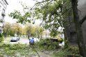 Vėjas laužė medžius, traukė elektros linijas