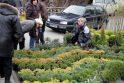 Sodininkų mugėje – nuo ekologiškų vaismedžių ir retų veislių augalų