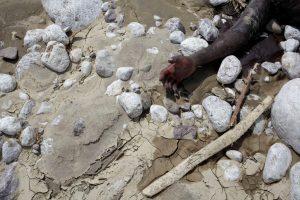 """Uragano """"Matthew"""" aukų skaičius Haityje siekia kone 400"""