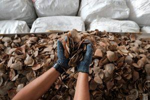 Tailande konfiskuotos trys tonos skujuočių žvynų