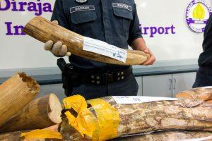 Malaizija konfiskavo beveik 1 mln. dolerių vertės gyvūnų dalių kontrabandą