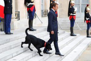 Prancūzija jau turi pirmąjį šunį